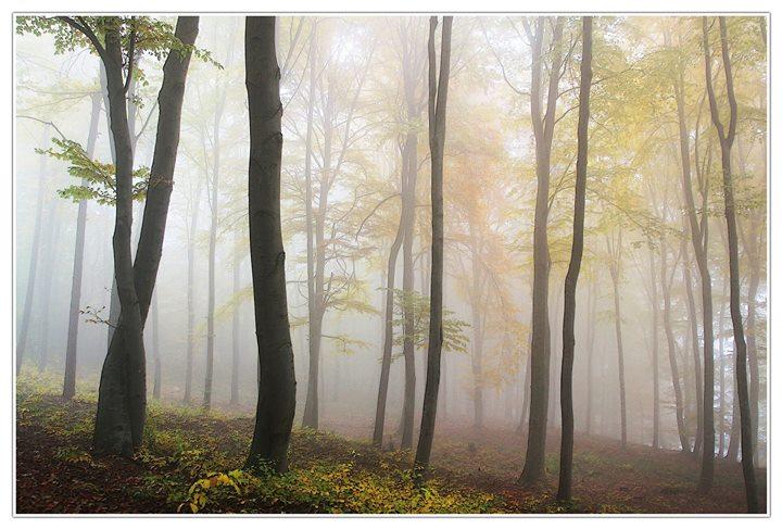 Die Heilkraft der Bäume